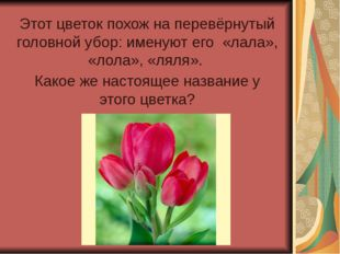 Этот цветок похож на перевёрнутый головной убор: именуют его «лала», «лола»,