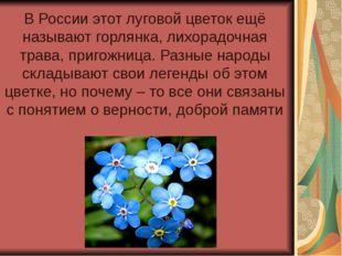В России этот луговой цветок ещё называют горлянка, лихорадочная трава, приго