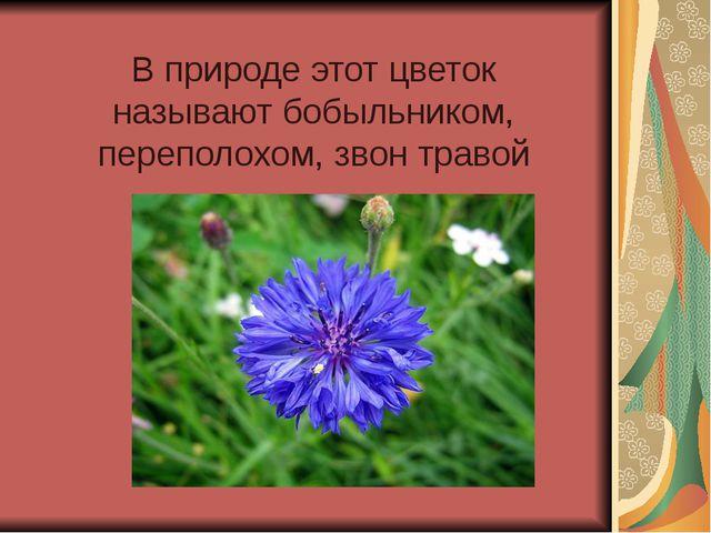 В природе этот цветок называют бобыльником, переполохом, звон травой