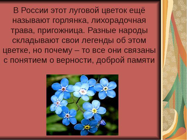 В России этот луговой цветок ещё называют горлянка, лихорадочная трава, приго...