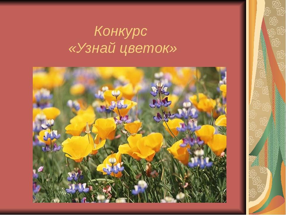 Конкурс «Узнай цветок»
