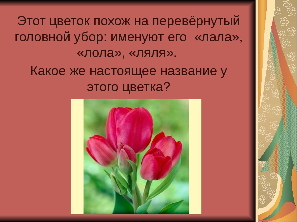 Этот цветок похож на перевёрнутый головной убор: именуют его «лала», «лола»,...