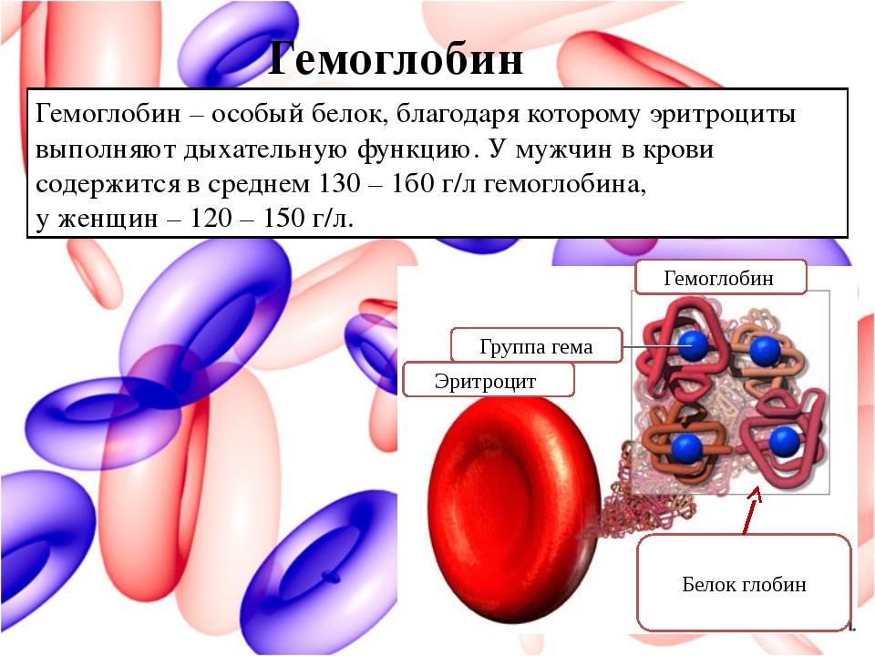 Гемоглобин Гемоглобин – особый белок, благодаря которому эритроциты выполняют...