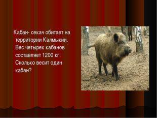 Кабан- секач обитает на территории Калмыкии. Вес четырех кабанов составляет