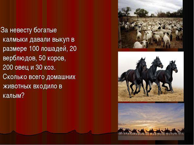 За невесту богатые калмыки давали выкуп в размере 100 лошадей, 20 верблюдов,...