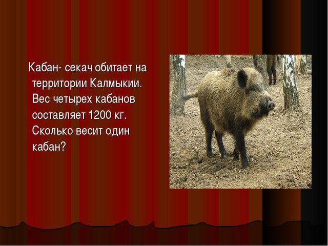 Кабан- секач обитает на территории Калмыкии. Вес четырех кабанов составляет...