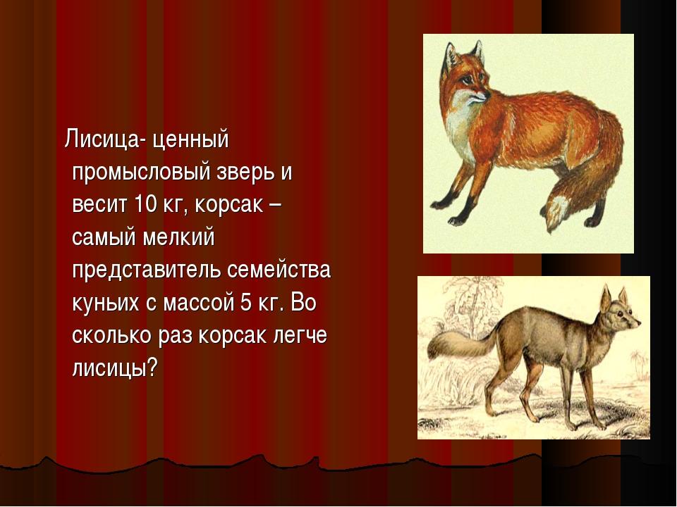 Лисица- ценный промысловый зверь и весит 10 кг, корсак – самый мелкий предст...
