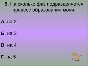 5. На сколько фаз подразделяется процесс образования мочи: А. на 2 Б. на 3 В.