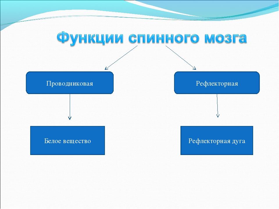 Проводниковая Рефлекторная Белое вещество Рефлекторная дуга