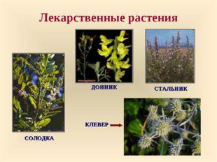 Лекарственные растения СОЛОДКА КЛЕВЕР ДОННИК СТАЛЬНИК