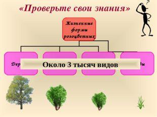 «Проверьте свои знания» Около 3 тысяч видов