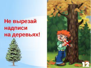 Не вырезай надписи на деревьях! Не вырезайте надписи на деревьях. Стоят дерев