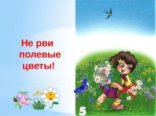 Не рви полевые цветы! Не рвите полевые цветы. Цветы украшают луга и леса но э