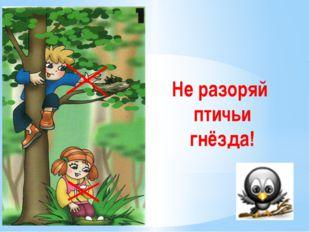 Не разоряй птичьи гнёзда! Не разоряйте птичьи гнёзда. Дети запомнить должны