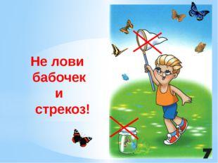 Не лови бабочек и стрекоз! Не ловите бабочек и стрекоз. Бабочка цветная над т