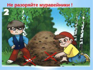 Не разоряйте муравейники. Муравьи – лесные санитары; так прозвали люди их нед