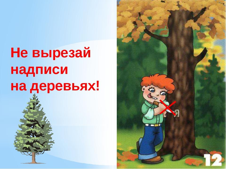 Не вырезай надписи на деревьях! Не вырезайте надписи на деревьях. Стоят дерев...