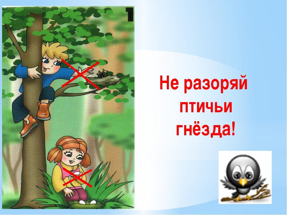 Не разоряй птичьи гнёзда! Не разоряйте птичьи гнёзда. Дети запомнить должны...