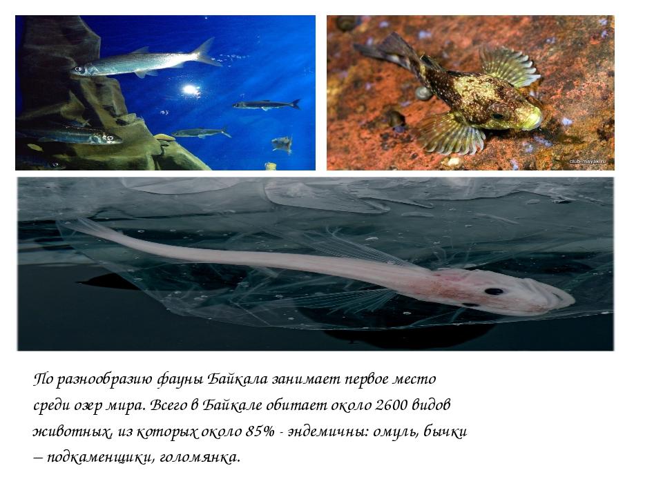 По разнообразию фауны Байкала занимает первое место среди озер мира. Всего в...