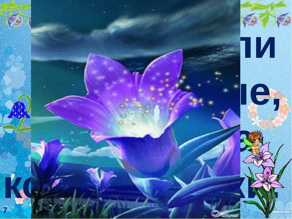 Цветы были незнакомые, похожие на колокольчики. 7