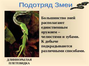 Большинство змей располагают единственным оружием – челюстями и зубами. К доб