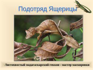 Листохвостый мадагаскарский геккон - мастер маскировки
