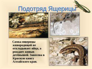 Самка ящерицы живородящей не откладывает яйца, а рождает живых детёнышей. За