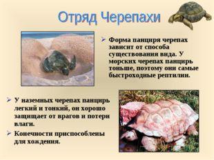 Форма панциря черепах зависит от способа существования вида. У морских черепа