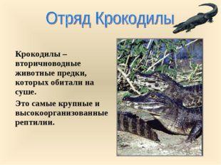 Крокодилы – вторичноводные животные предки, которых обитали на суше. Это самы