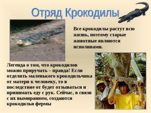 Все крокодилы растут всю жизнь, поэтому старые животные являются исполинами.