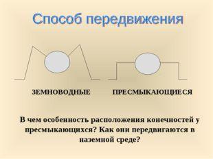 В чем особенность расположения конечностей у пресмыкающихся? Как они передвиг