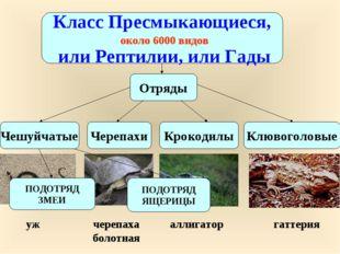Класс Пресмыкающиеся, или Рептилии, или Гады около 6000 видов Чешуйчатые Чере