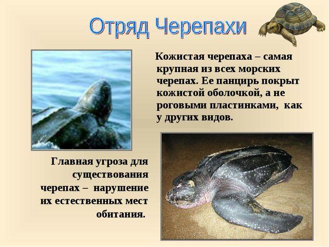 Главная угроза для существования черепах – нарушение их естественных мест об...