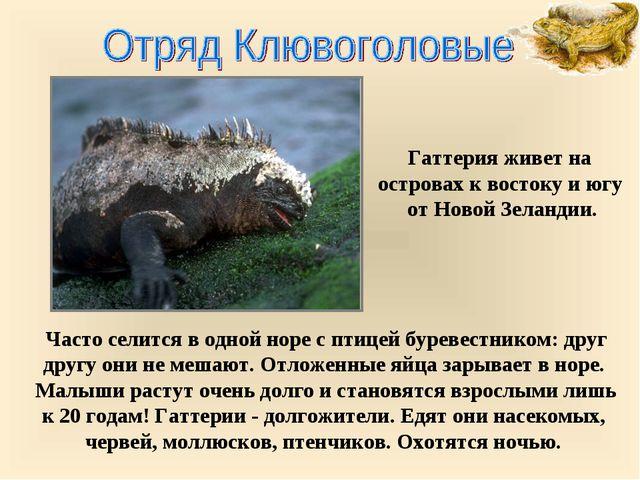 Часто селится в одной норе с птицей буревестником: друг другу они не мешают....