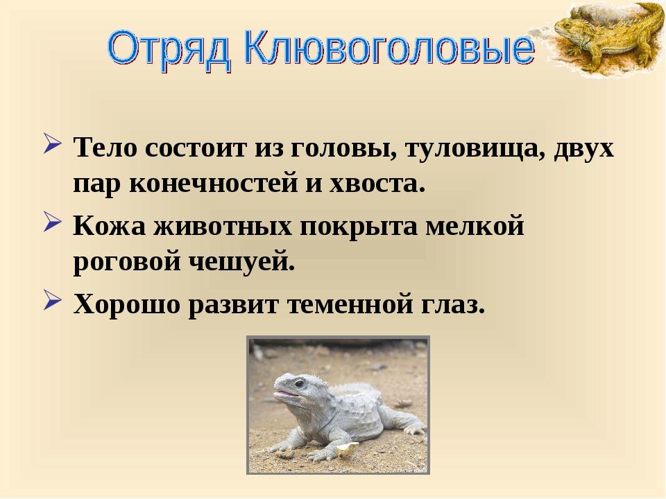 Тело состоит из головы, туловища, двух пар конечностей и хвоста. Кожа животны...