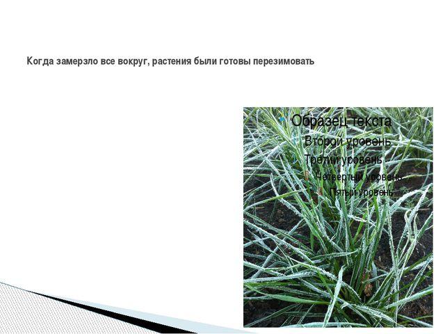 Когда замерзло все вокруг, растения были готовы перезимовать