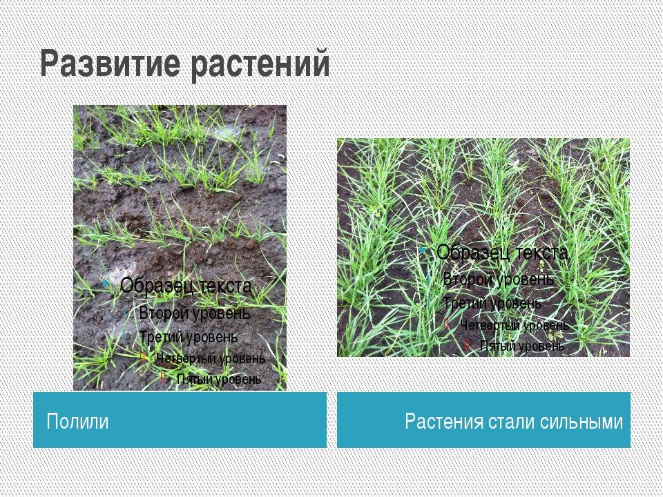 Развитие растений Полили Растения стали сильными