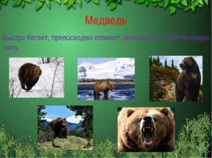 Медведь Быстро бегает, превосходно плавает, воплощает в себе большую силу. *
