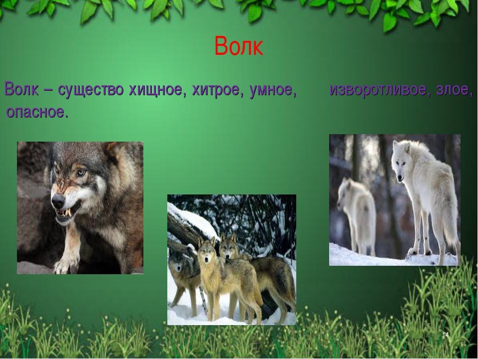 Волк Волк – существо хищное, хитрое, умное, изворотливое, злое, опасное. *
