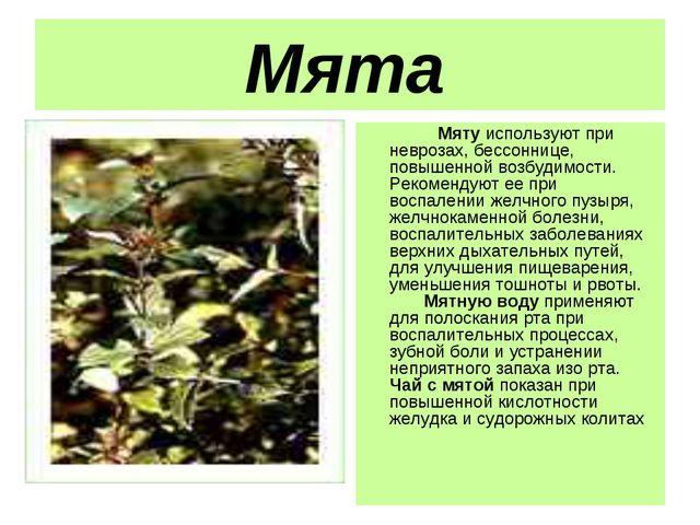 Мята  Мяту используют при неврозах, бессоннице, повышенной возбудимост...