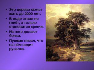 Это дерево может жить до 2000 лет. В воде ствол не гниёт, а только становится