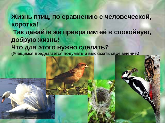 Жизнь птиц, по сравнению с человеческой, коротка! Так давайте же превратим её...