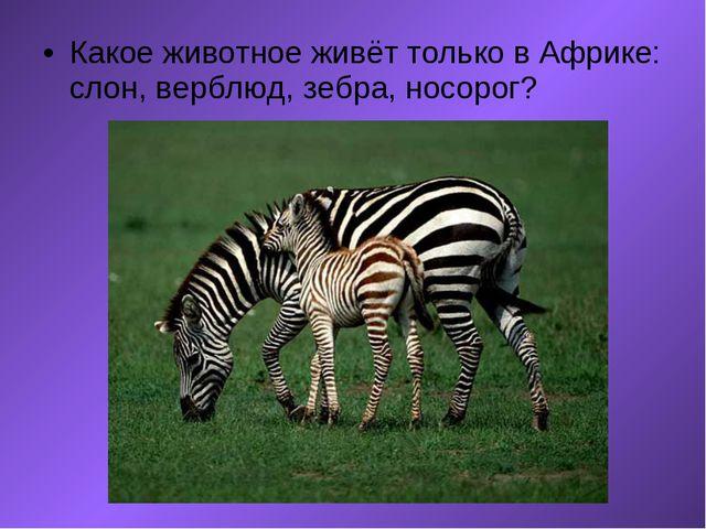 Какое животное живёт только в Африке: слон, верблюд, зебра, носорог?  ...