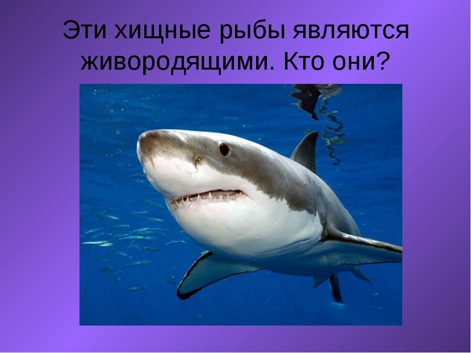 Эти хищные рыбы являются живородящими. Кто они?  ...