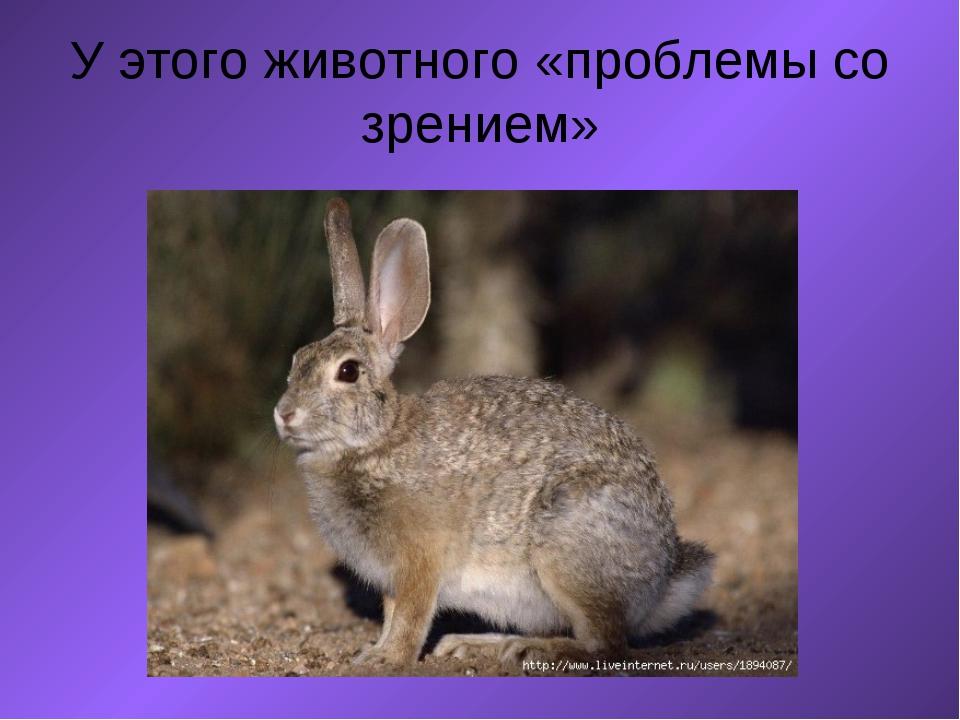 У этого животного «проблемы со зрением»  ...