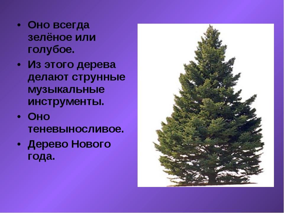 Оно всегда зелёное или голубое. Из этого дерева делают струнные музыкальные и...