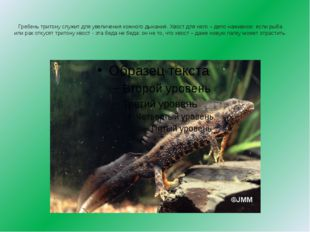 На спинке у жабы есть ядовитые железы, которые выделяют жидкость, отпугивающ