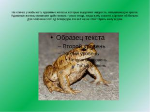 Саламандра очень любит дождливую погоду, за что её прозвали «дождевой ящерице
