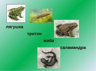 лягушка тритон жаба саламандра