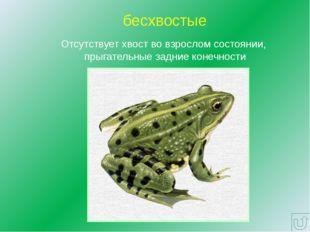 Многообразие отряда Бесхвостые земноводные Озерная лягушка Жаба серая Колорад